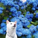 青がキレイ。